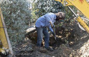 Movimentazione piante, aree di intervento Orvieto, Viterbo, Chiusi, Terni, Perugia